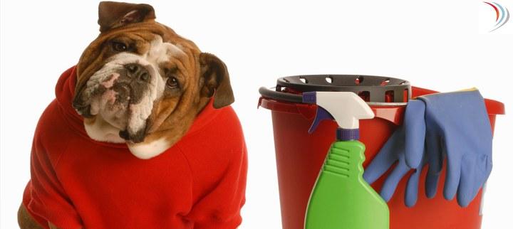 Condomínios – Como deve ser a higienização dos locais onde gatos e cachorros defecam?